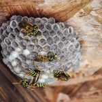 Wasps on a wasp nest