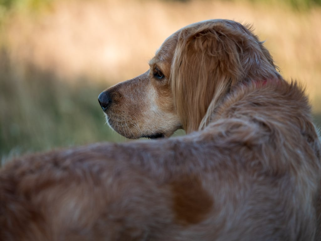 How to get fleas off your pets