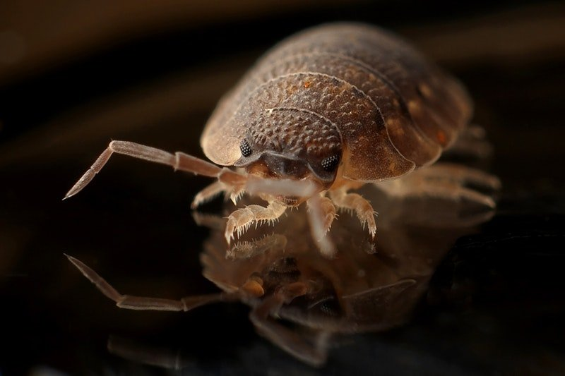How to get rid of bed bugs guide