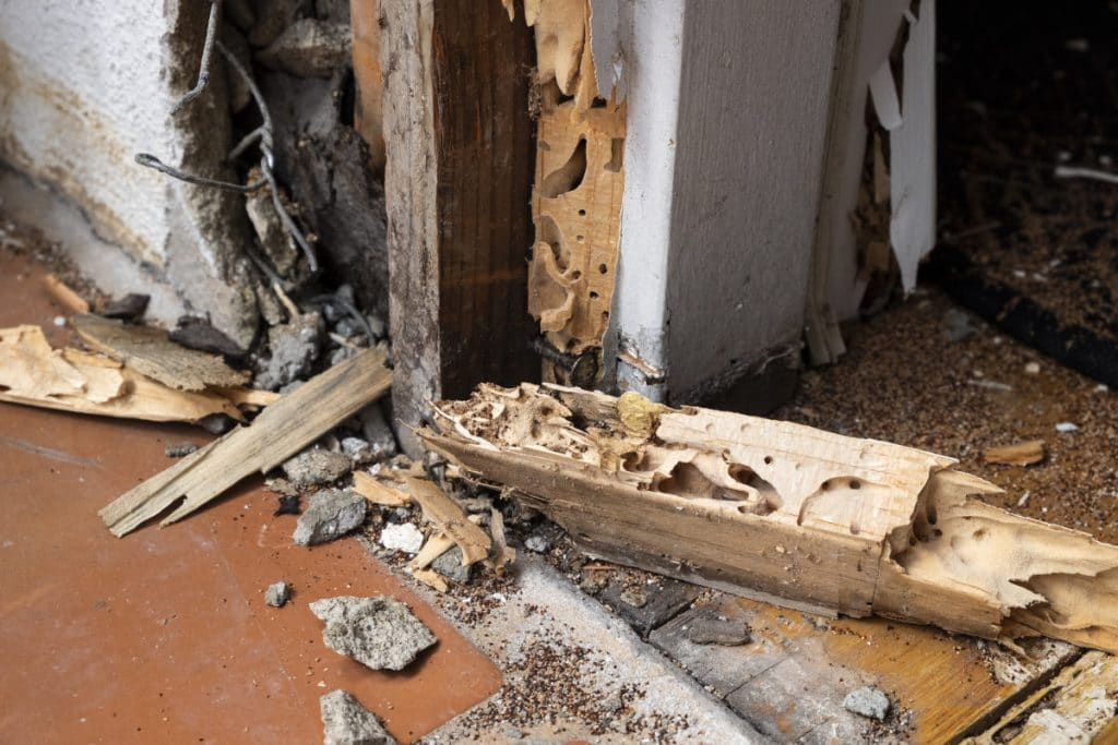 A house damaged by termites