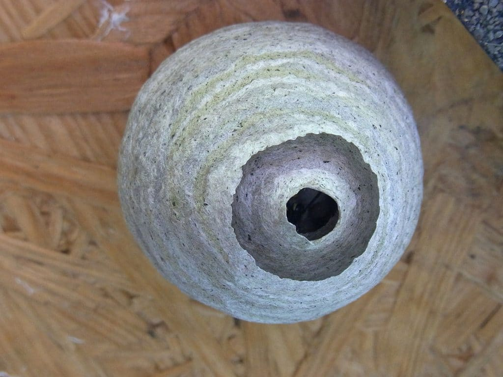 Common places to find wasp nests