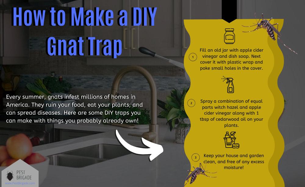 How to make a DIY gnat trap