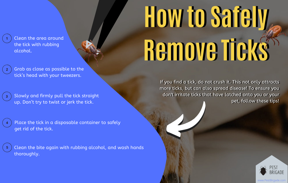 How to safely remove ticks infographic
