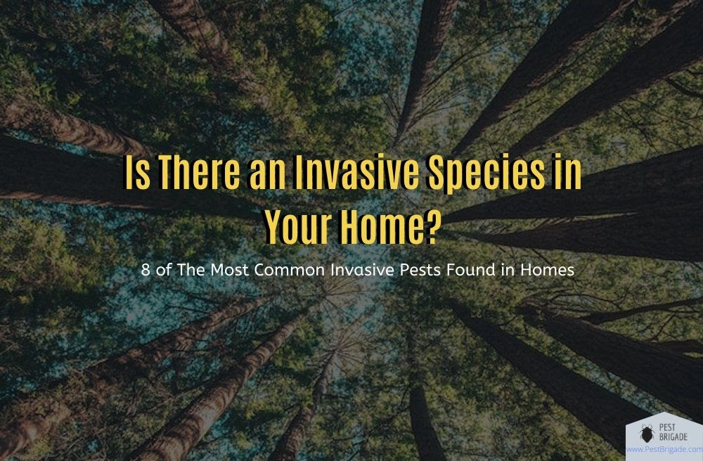 Invasive species in your home #invspwk