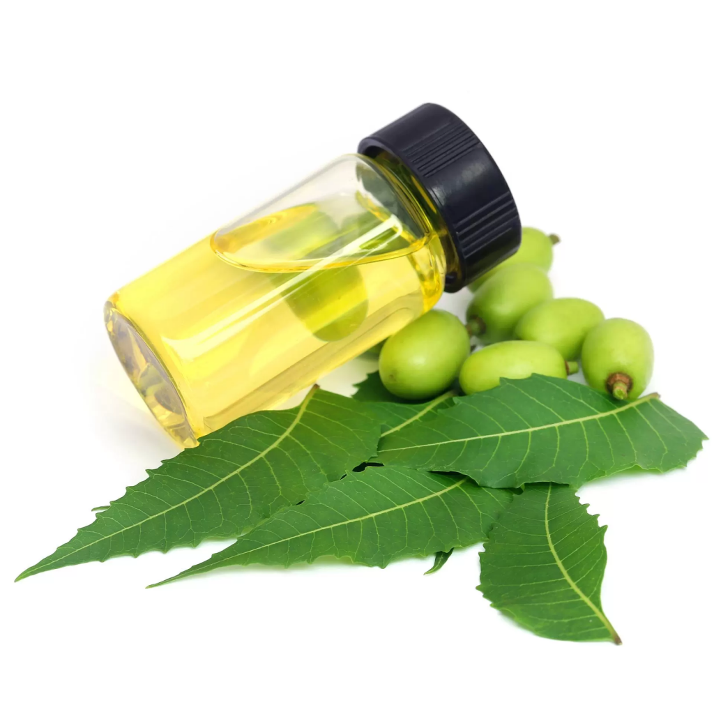 Neem oil derived from neem trees