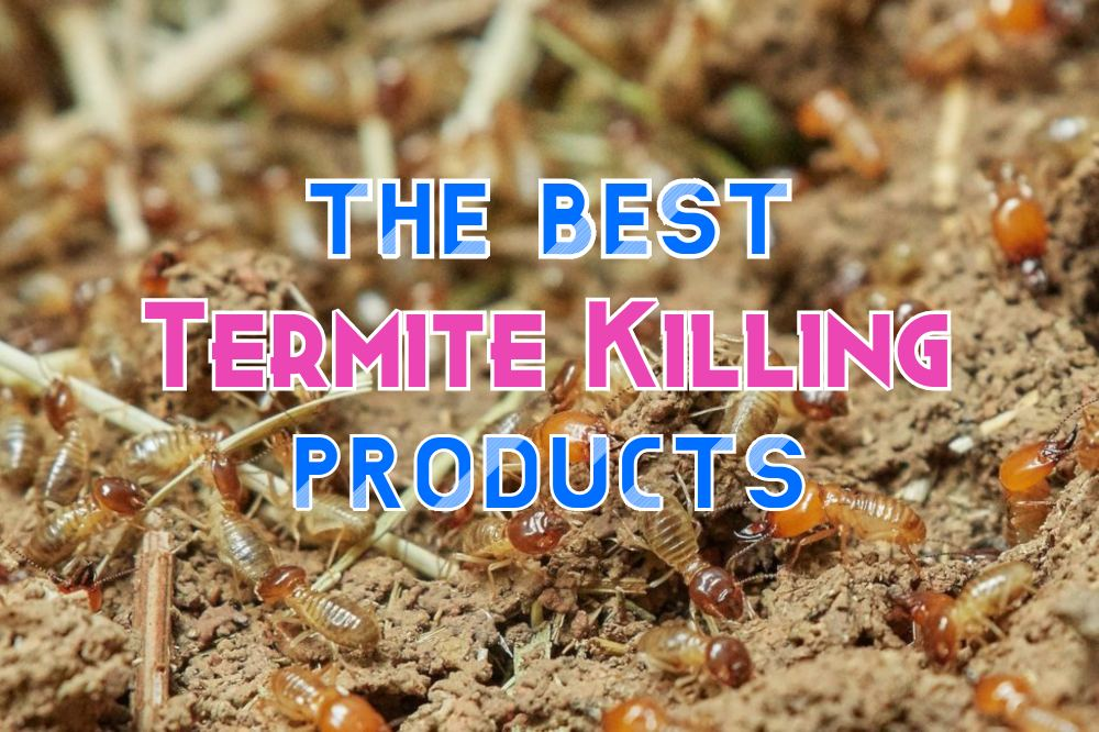 The best termite killing products