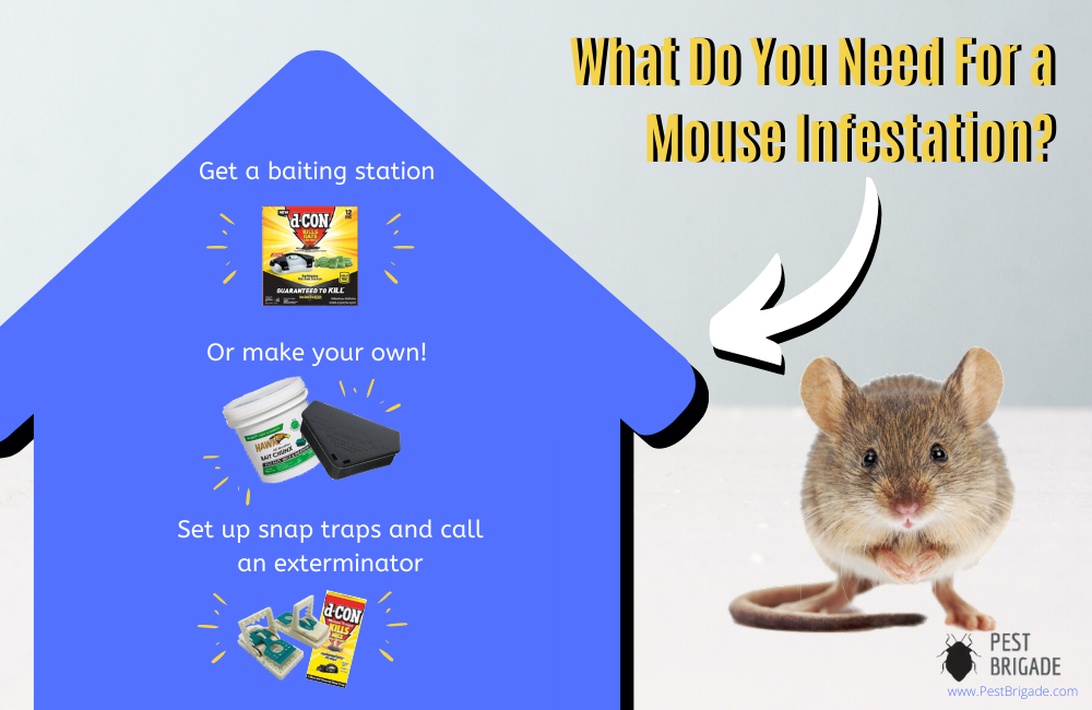 what to do about a mouse infestation