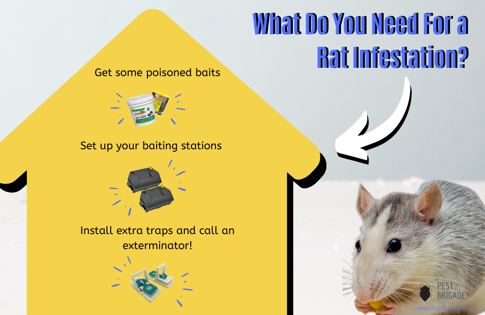 what do you need for a rat infestation?