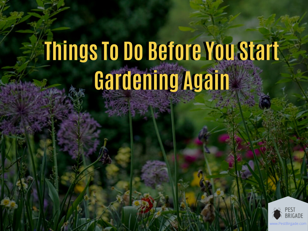 before-you-start-gardening-again