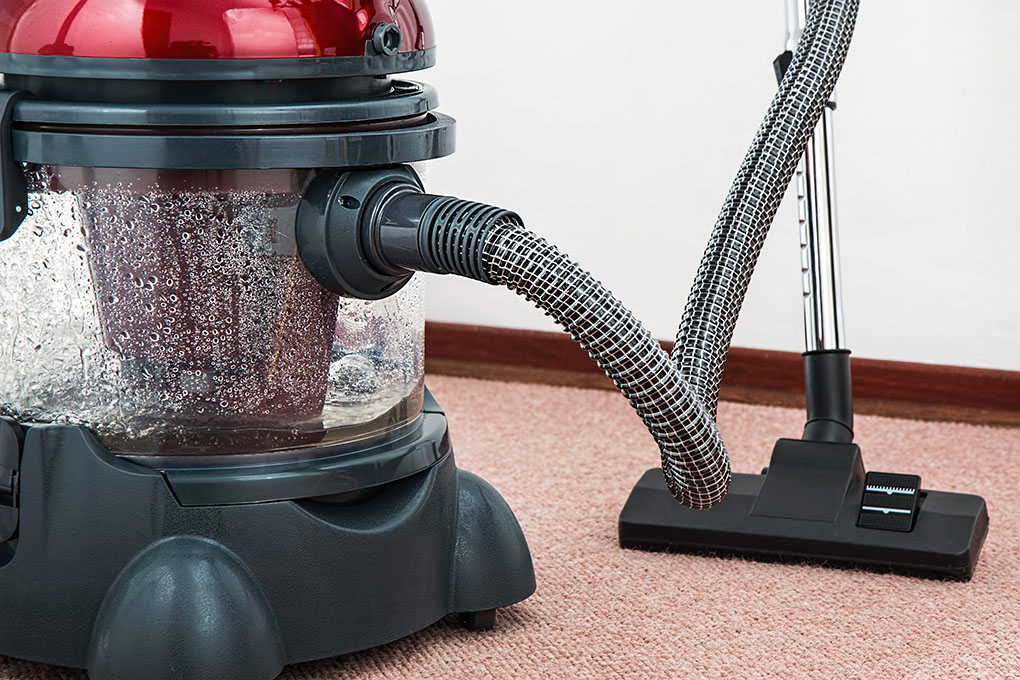 5-reason-you-have-carpet-beetle-and-how-to-get-rid-of-them
