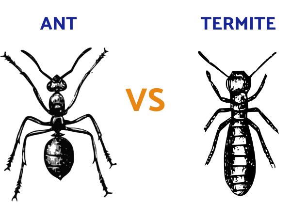 ant-vs-termite-example
