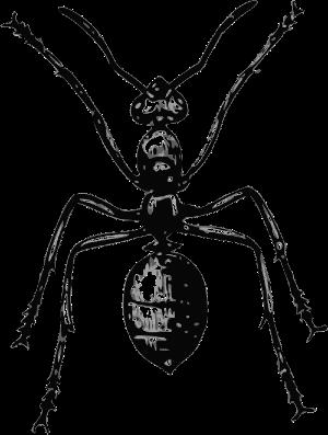 carpenter ant vs termite
