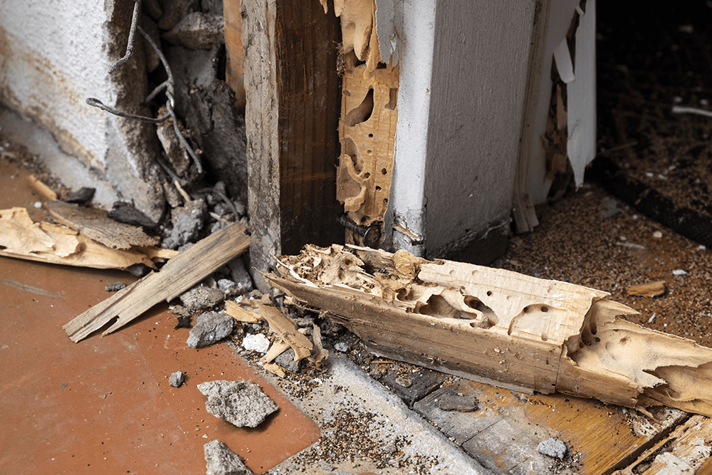 mud tubes from termite damage
